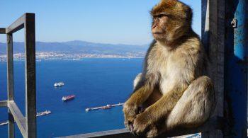 monkey-2038518_1280